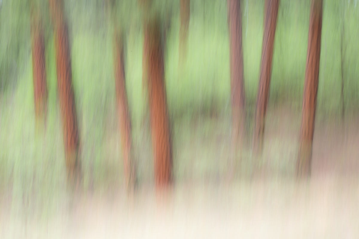 The Painted Woodland-18.jpg