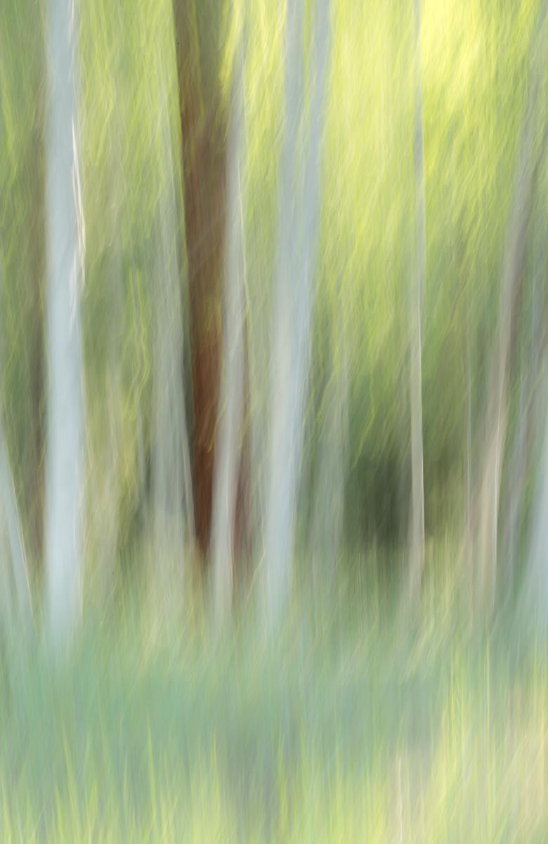 The Painted Woodland-20.jpg