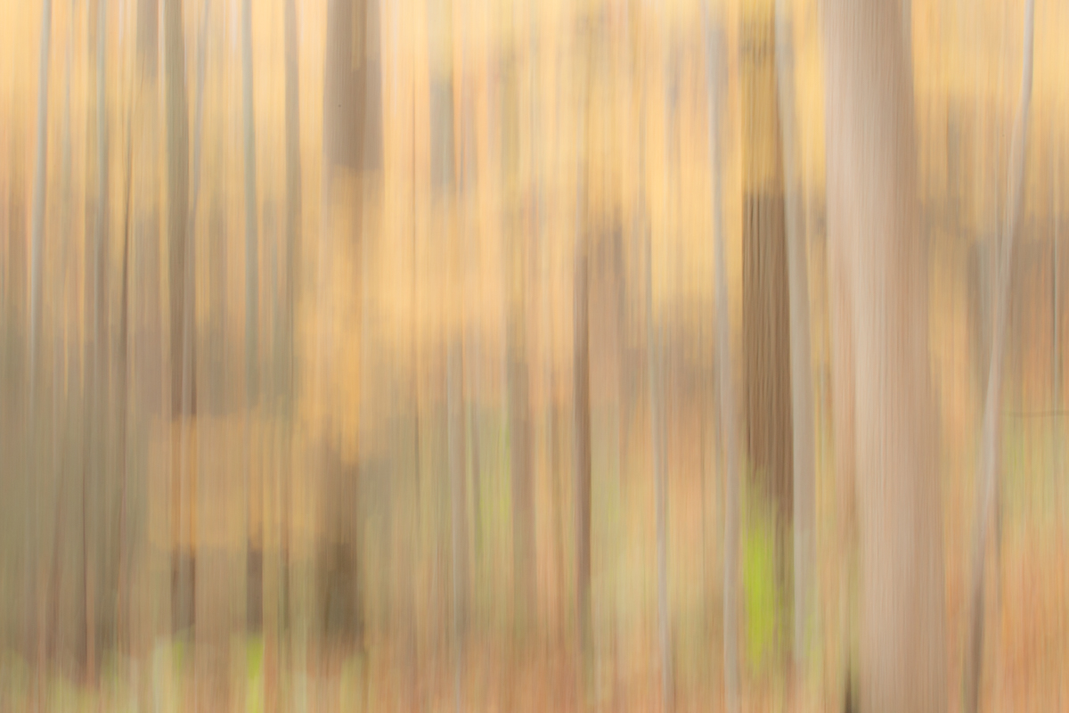 The Painted Woodland-23.jpg