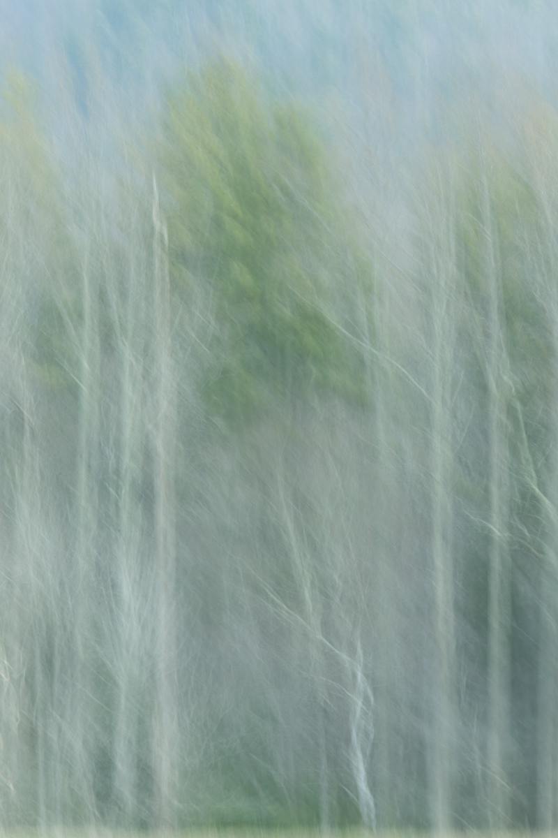The Painted Woodland-25.jpg