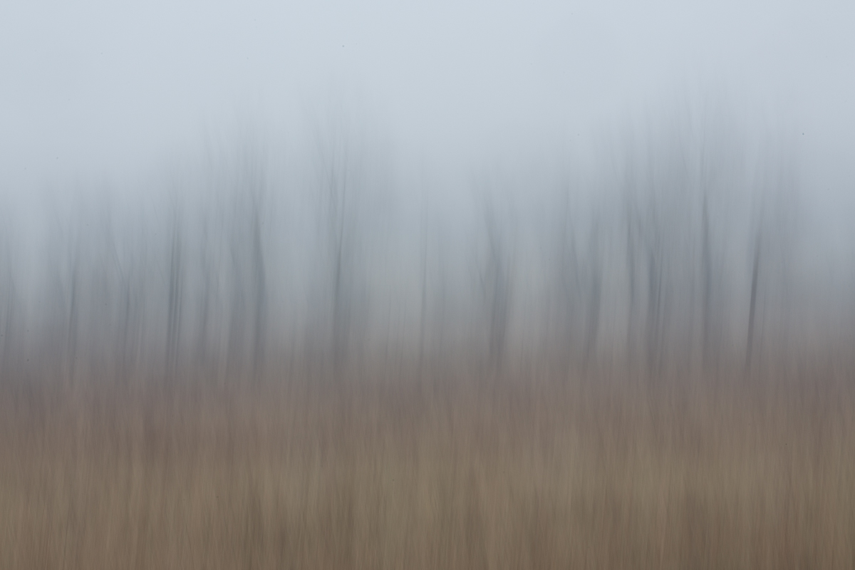 The Painted Woodland-28.jpg