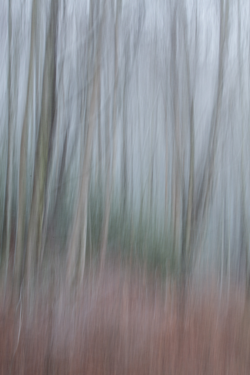 The Painted Woodland-30.jpg
