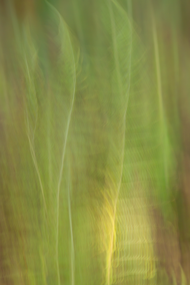 The Painted Woodland-37.jpg