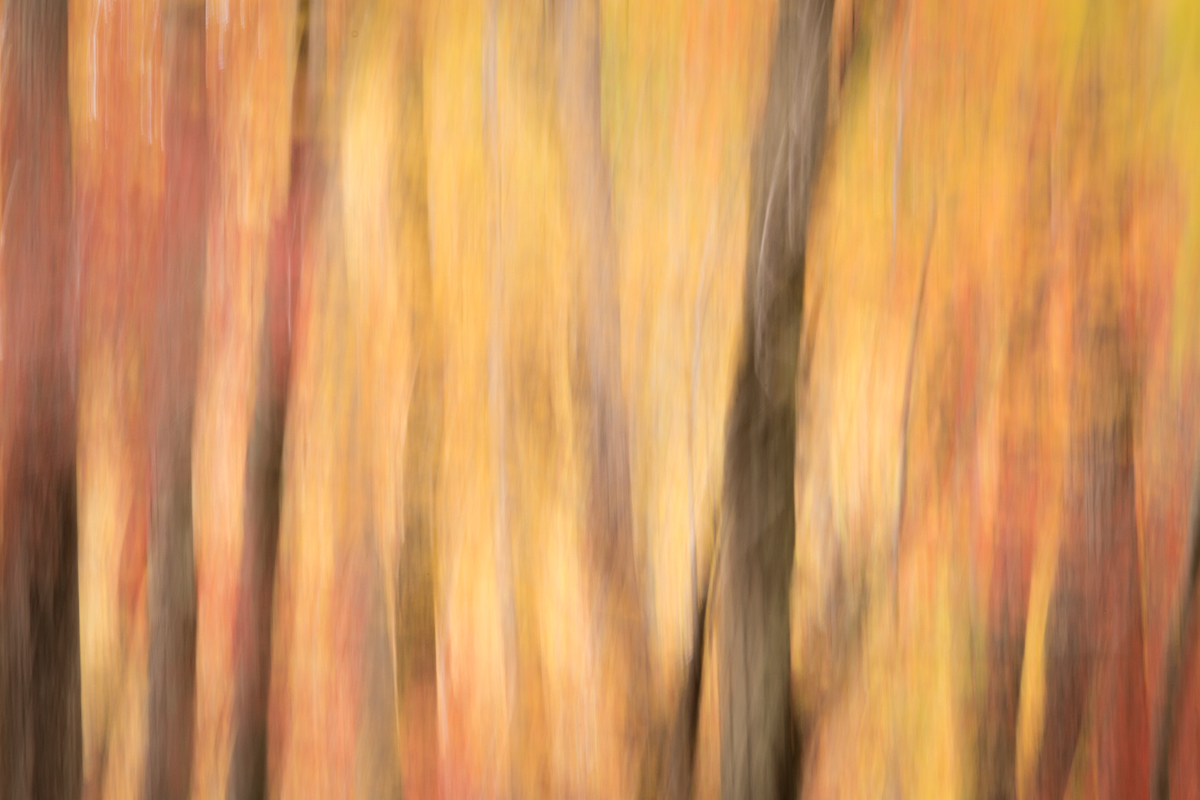 The Painted Woodland-42.jpg