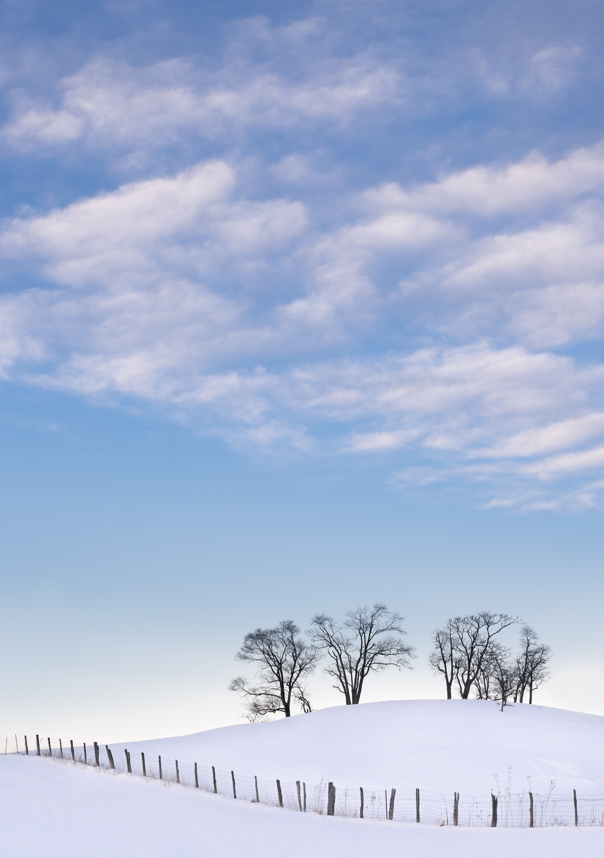 Winter Dancing Trees