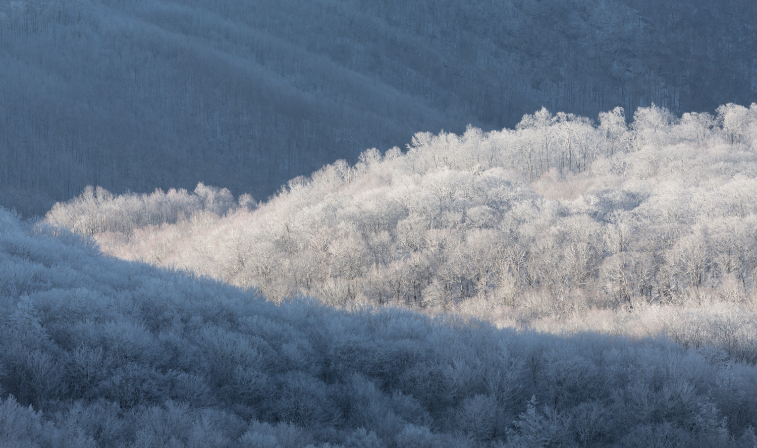 The Frost and the Boughs #2