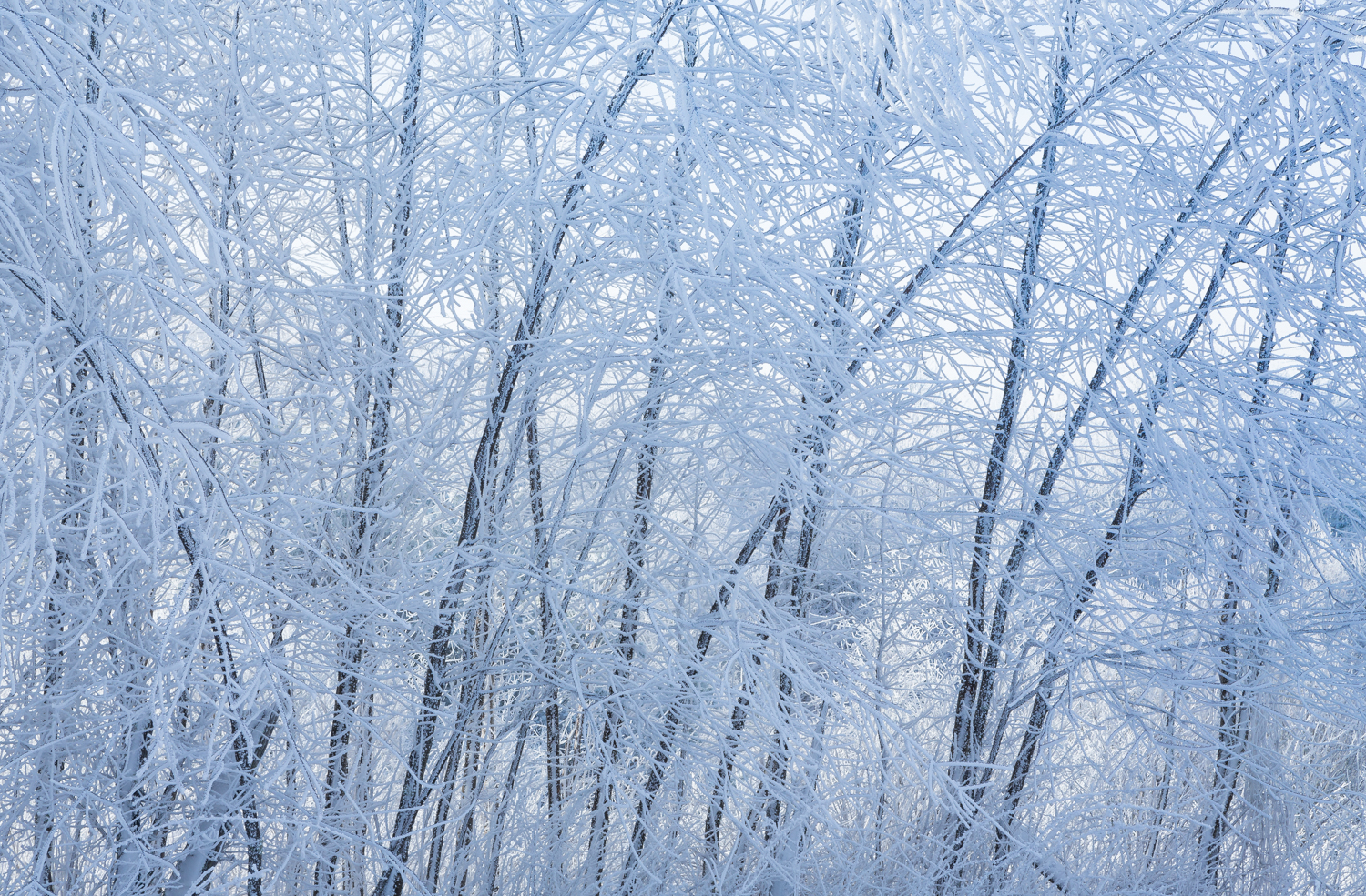 The Frost and the Boughs #1