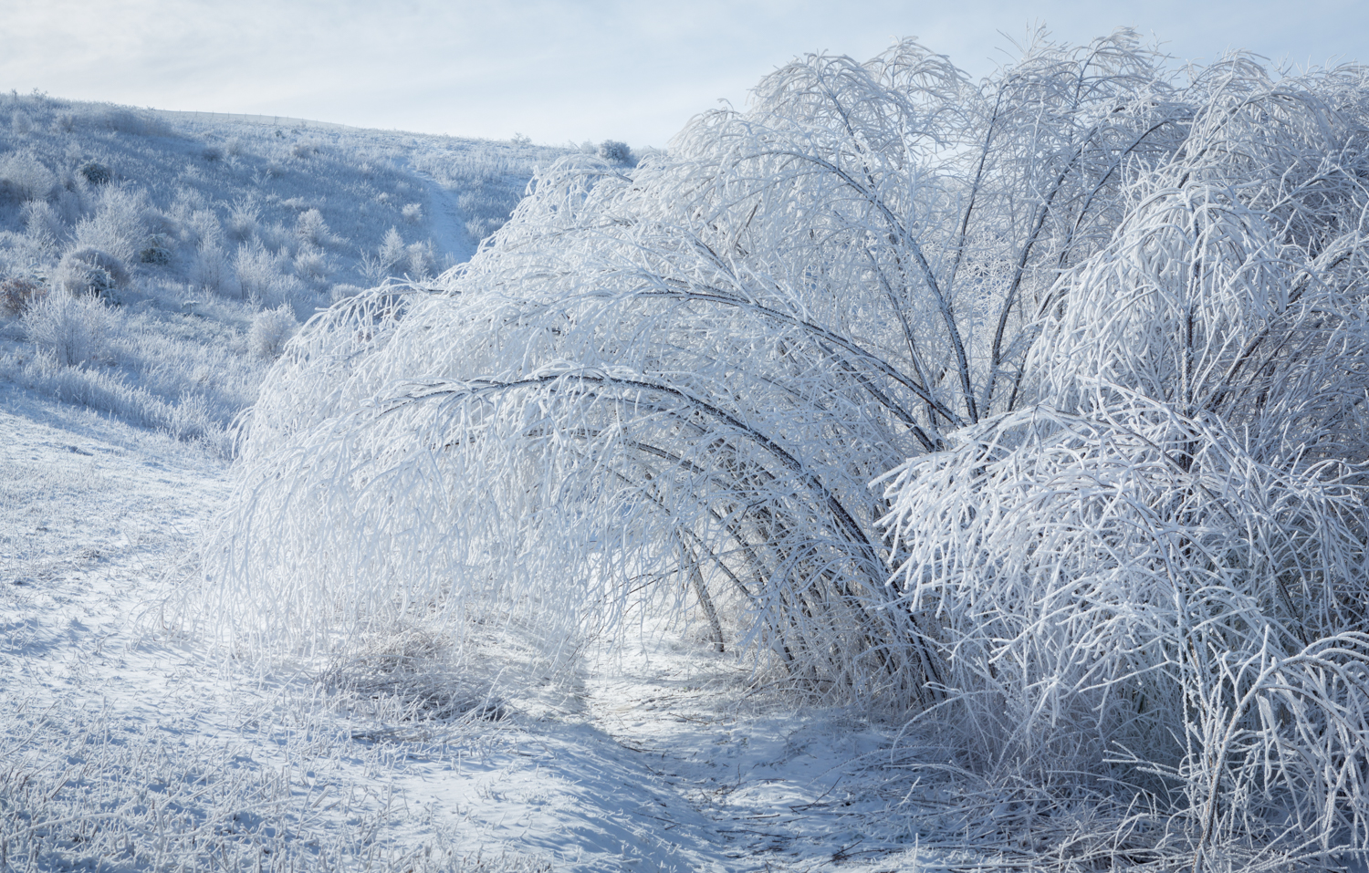 The Frost and the Boughs #4