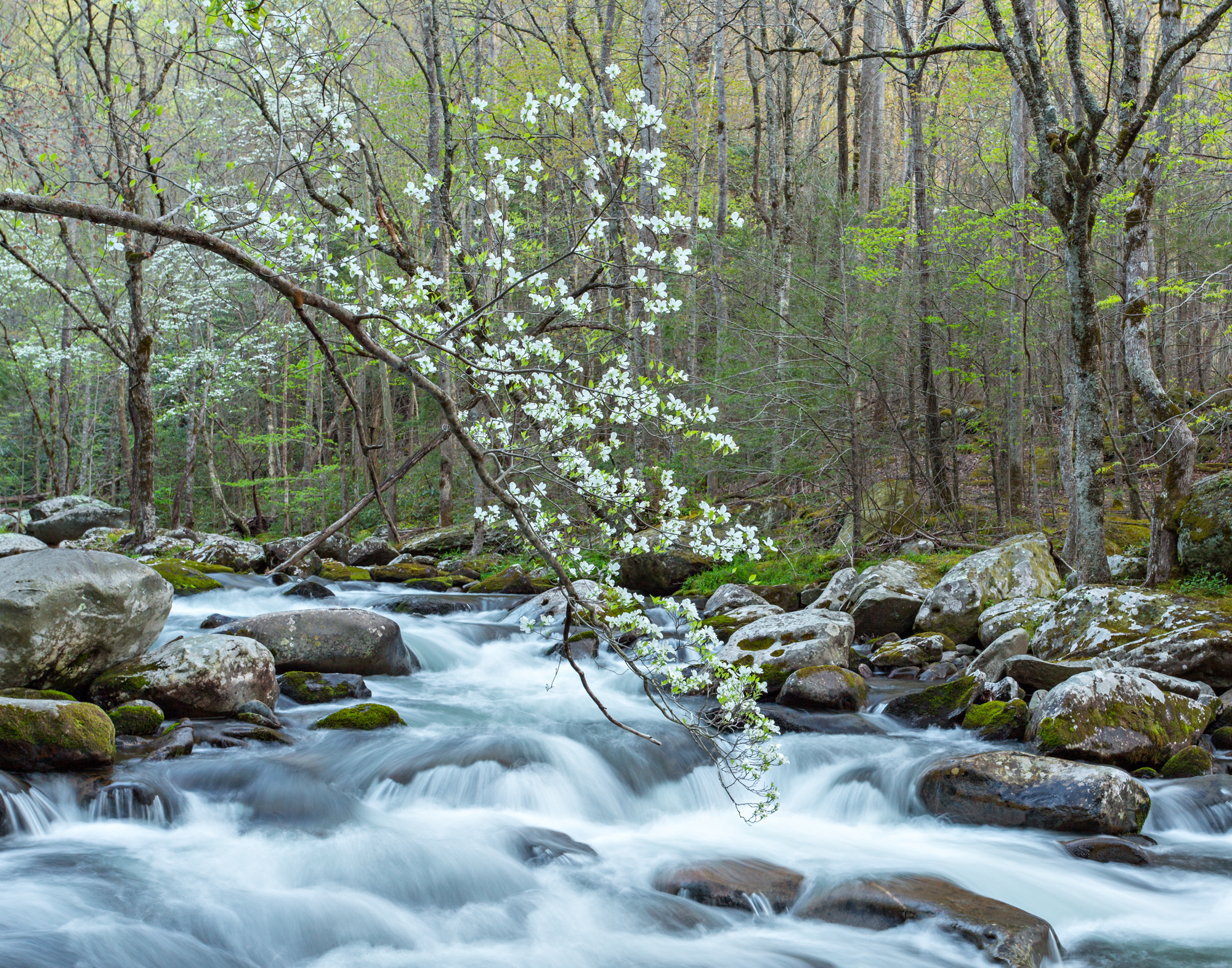 13. Tremont, Great Smoky Mountains National Park, Tennessee