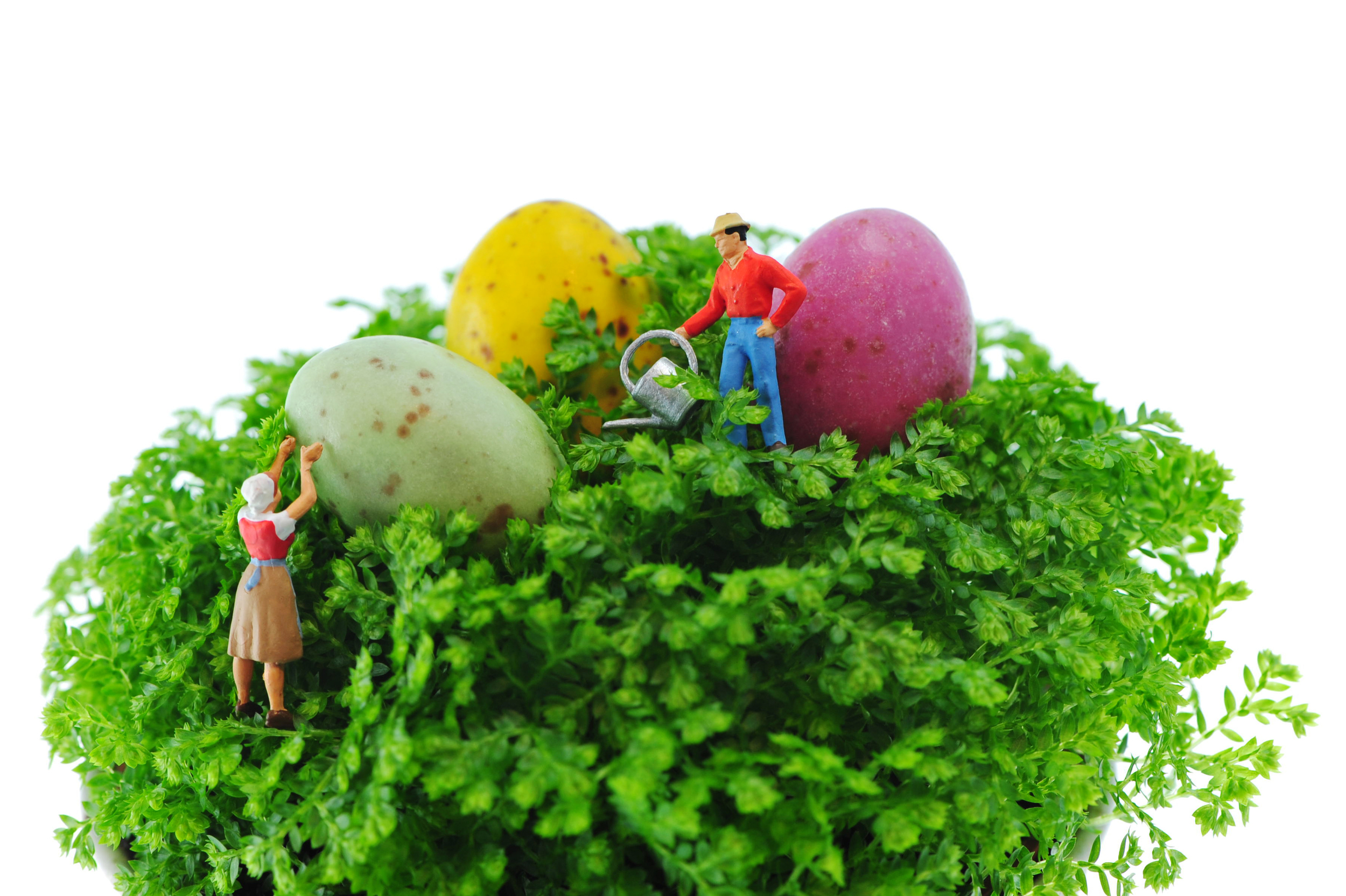 Dorothy and Bob are preparing the nest for Easter Eggs...getting ready for the treasure hunt yet?