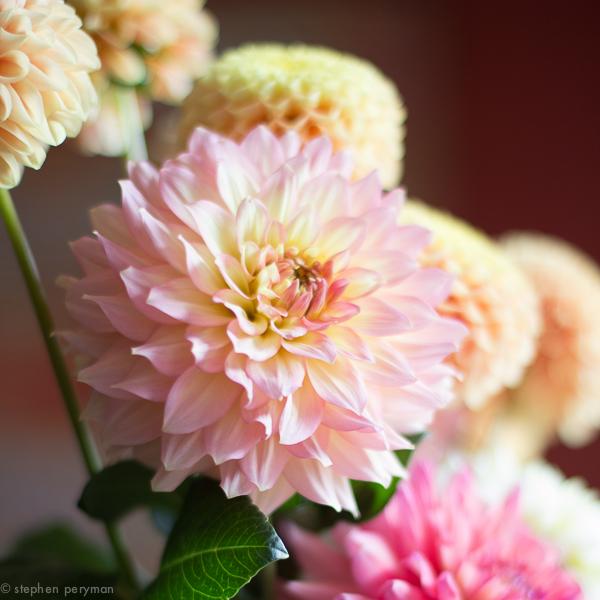 flowers-0232.jpg