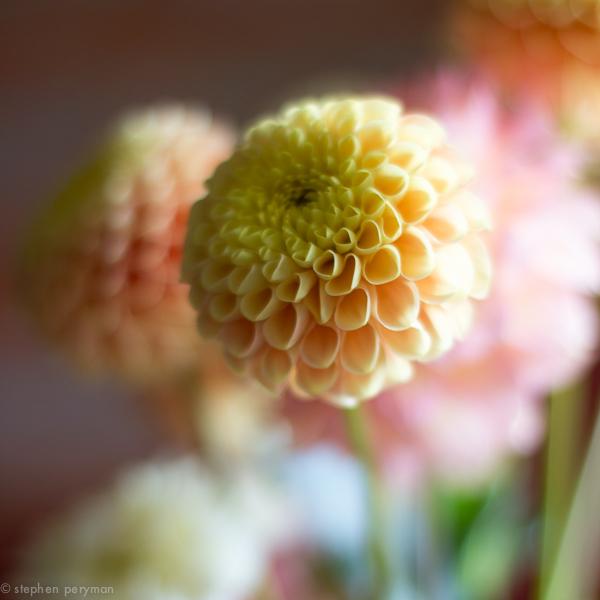 flowers-0230.jpg