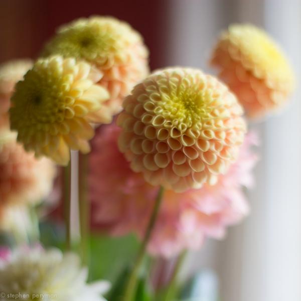flowers-0236.jpg