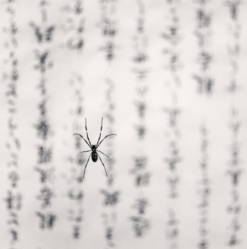 65. MK - Spider and Sacred Text, Study 1, Yakuki, Shikoku, Japan. 2001.jpg