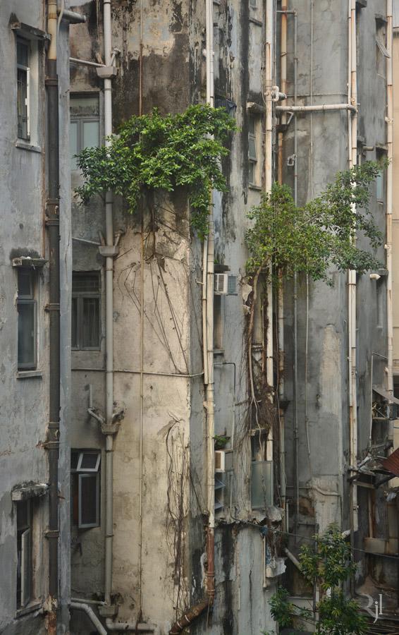 Wild Concrete #04.jpg