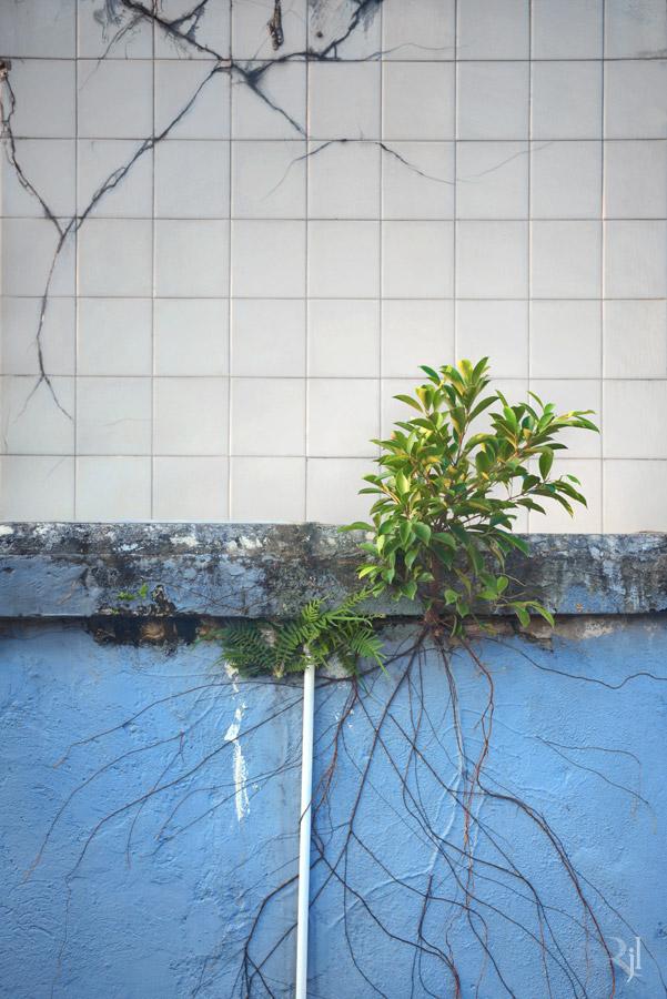 Wild Concrete #12.jpg