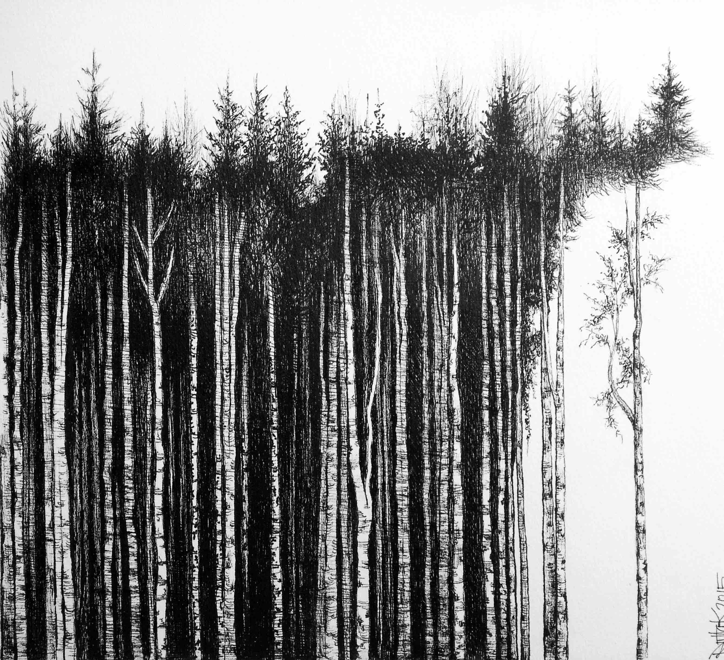 5. Riitta Kuisma, Into the woods, 2015, 20x20cm, drawing pen on paper, HKD 8800 (framed).jpg
