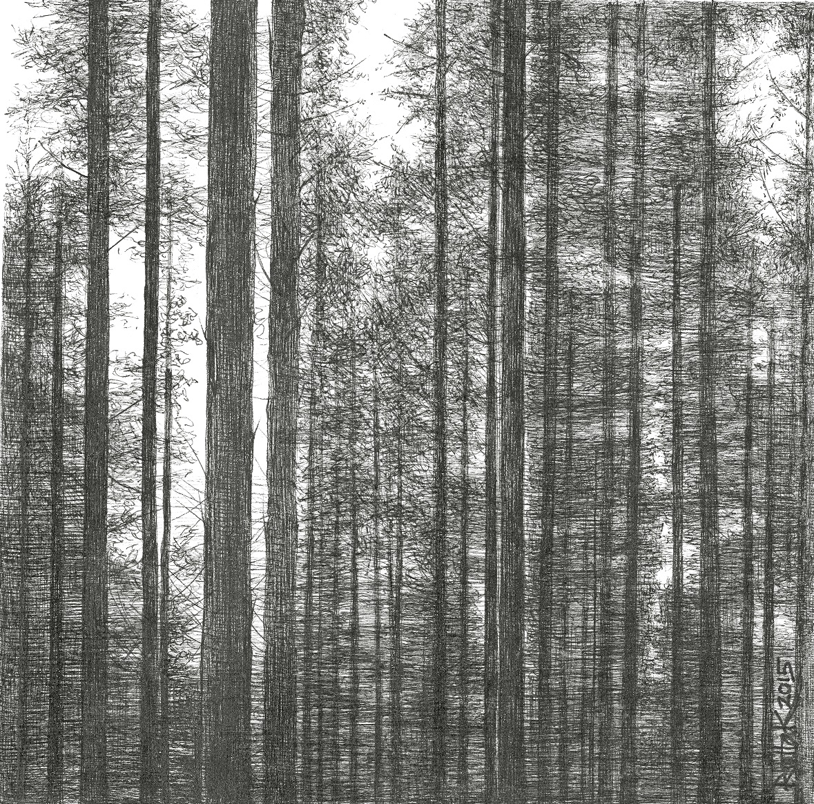 Riitta Kuisma, Into the woods II, 2015, 20x20cm, fine pen drawing on paper.jpg