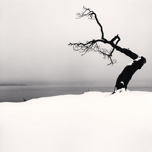 Michael Kenna, Kussharo Lake Tree, Study 5, Kotan, Hokkaido, Japan. 2007. Silver Gelatin Print. Edition of 45.