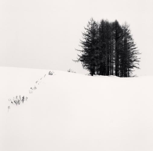 Cold Landscape, Sanai, Hokkaido, Japan. 2004