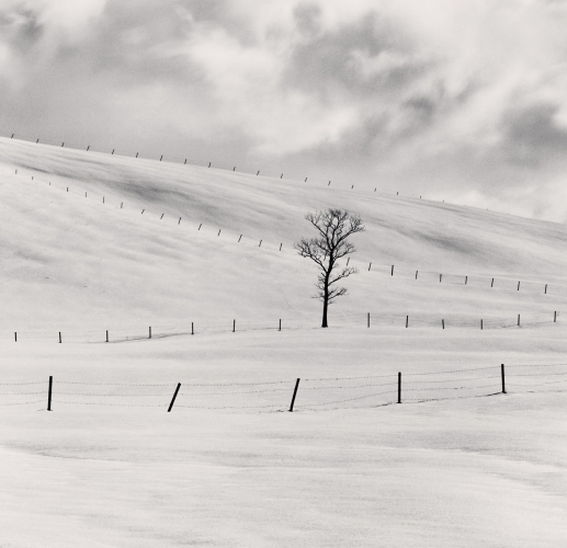 Frozen Landscape, Teshikaga, Hokkaido, Japan. 2002