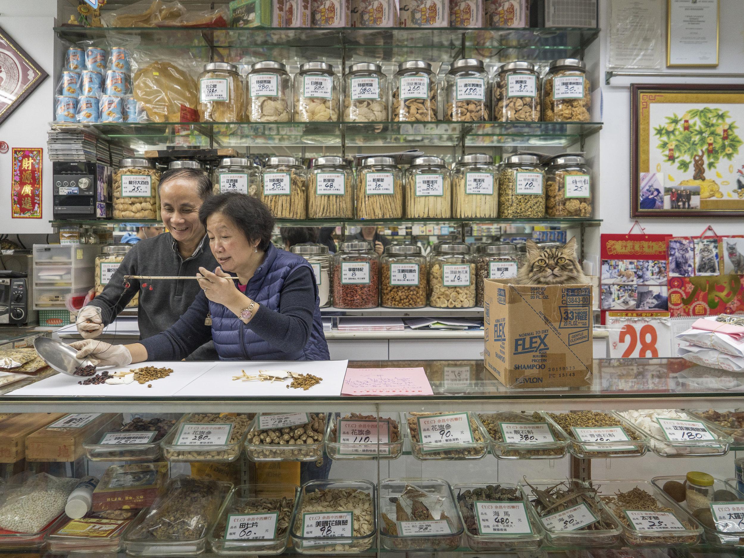M. Heijnen, HK Shop Cats #17.jpg