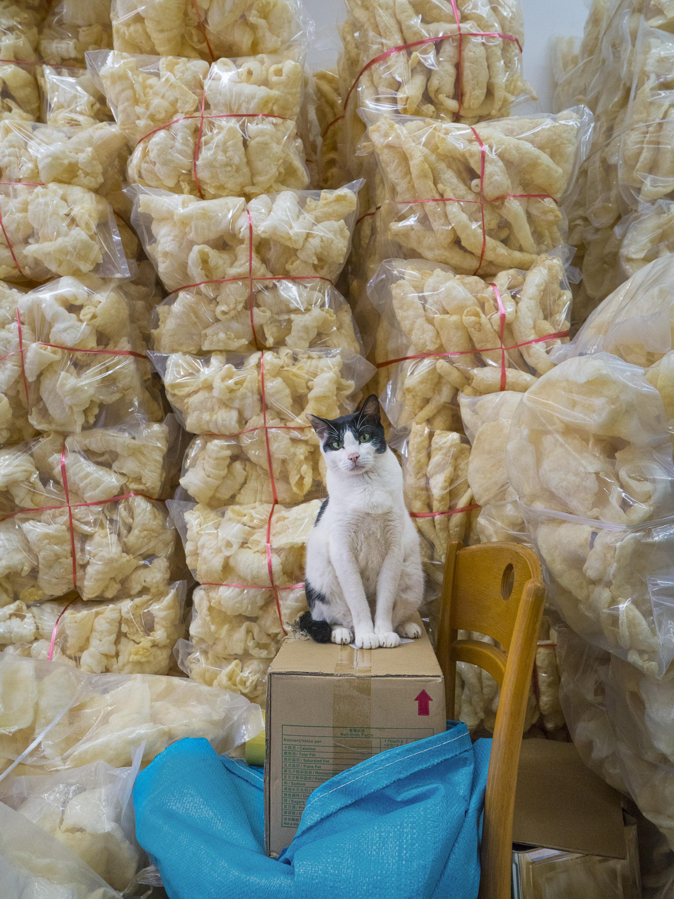M. Heijnen, HK Shop Cats #25.jpg