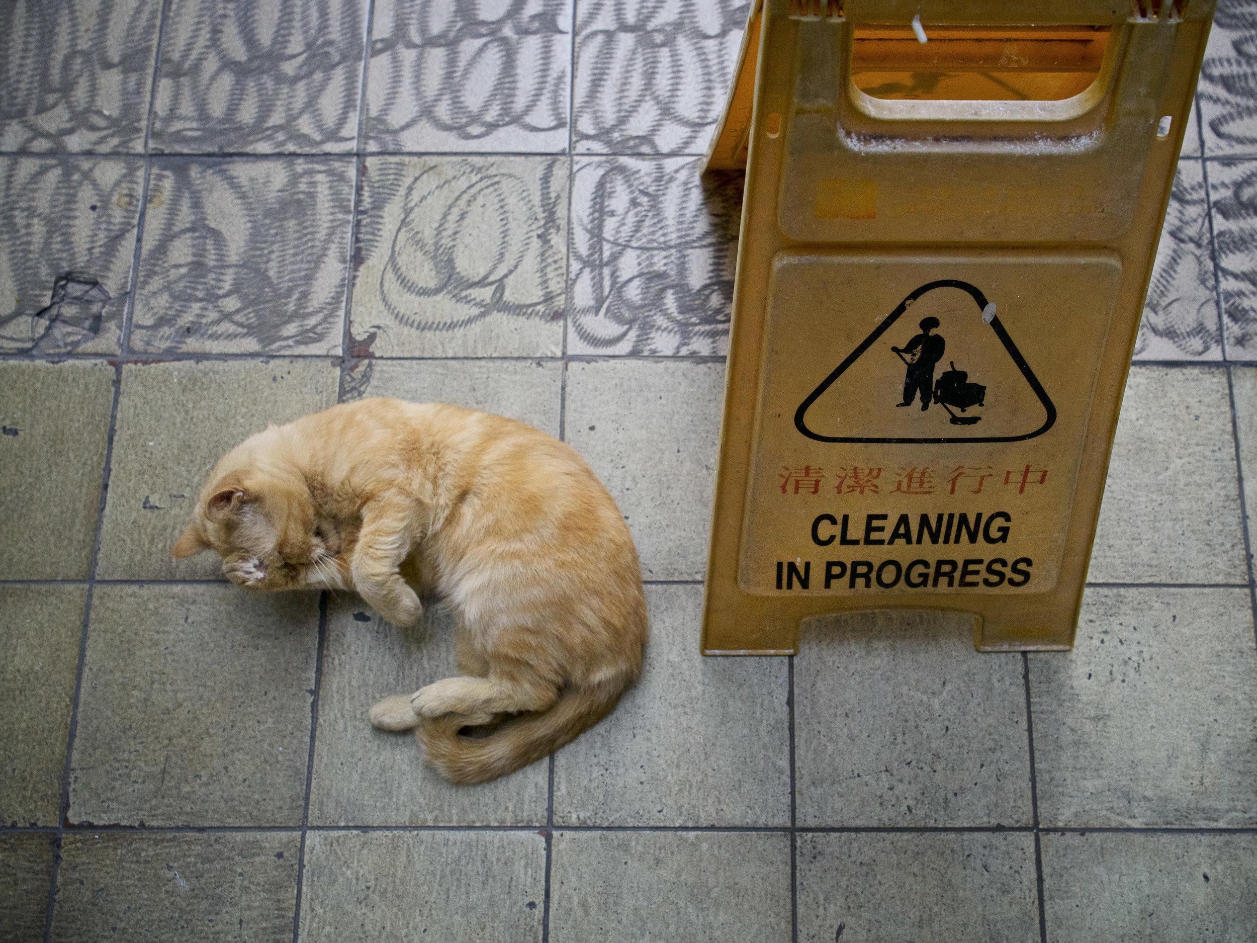Marcel Heijnen, 'Cleaning in Progress'