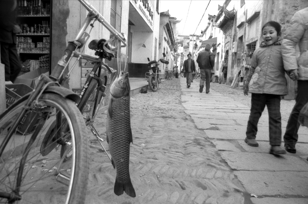 Jo Farrell, Fish Transport, Hong Can (China, 1993)