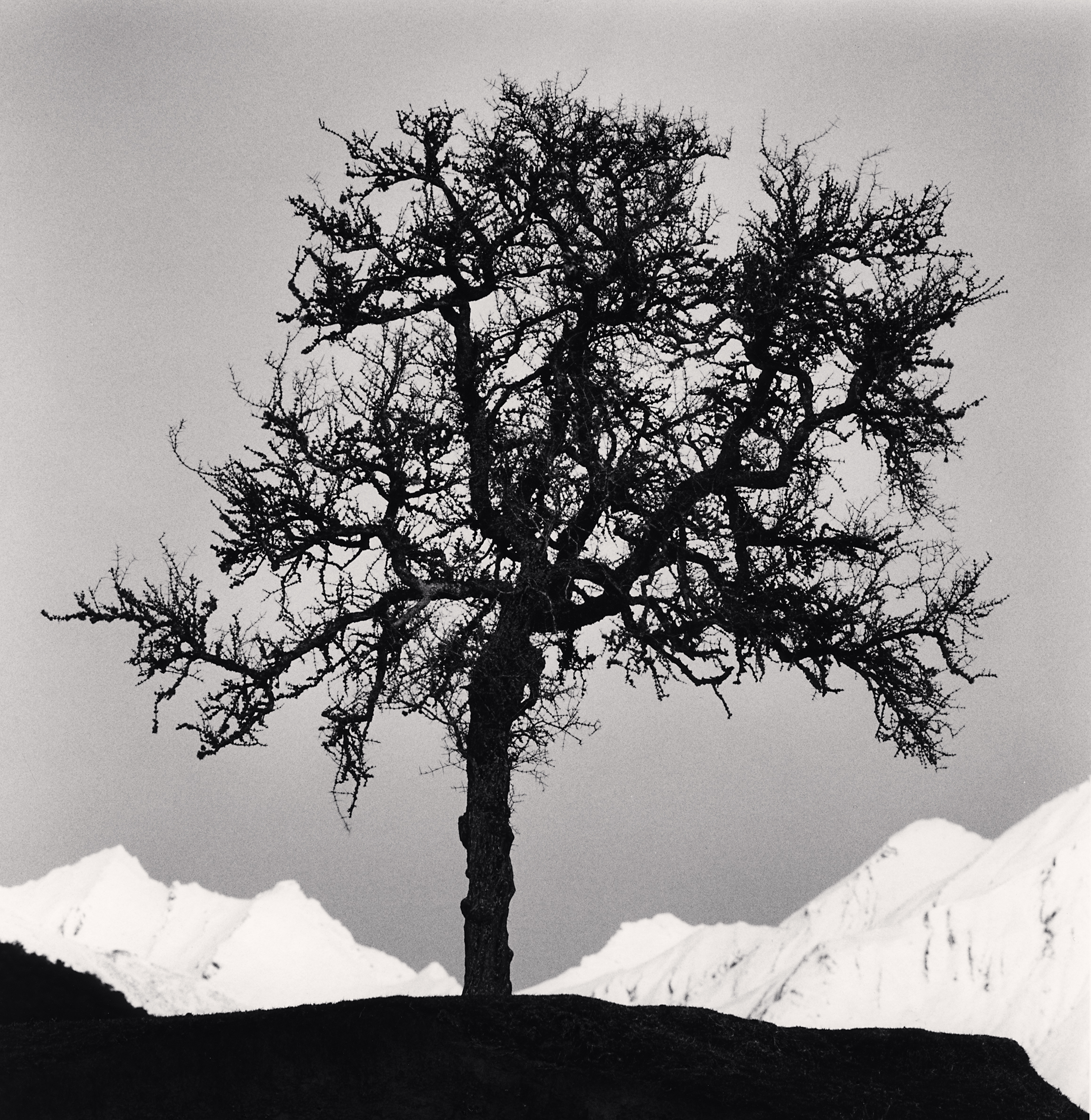 Matagouri Tree, Paradise, Otago, New Zealand. 2013.jpg