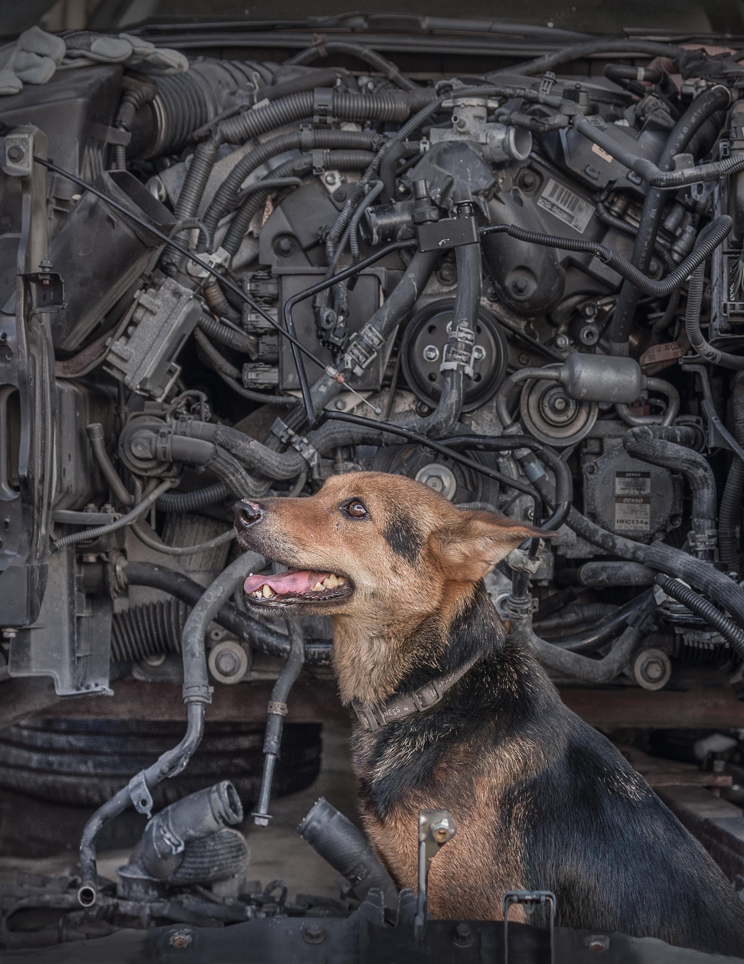Marcel Heijnen - Canine Machine.jpg
