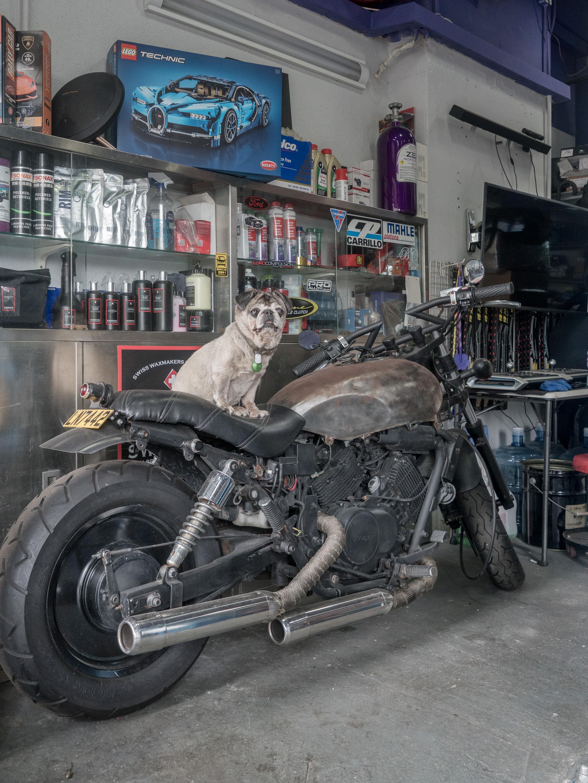 Pugcycle.jpg
