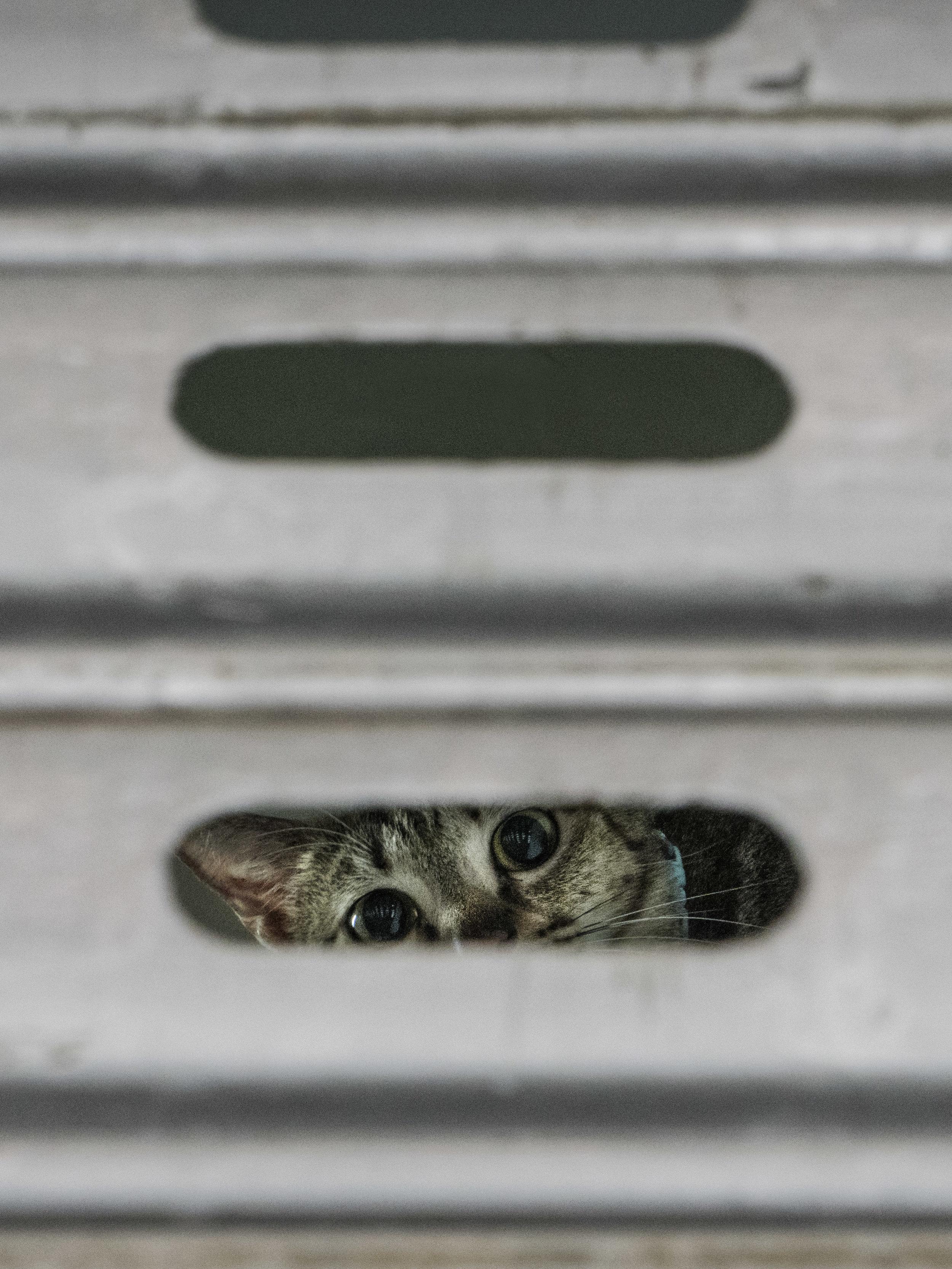 M. Heijnen, HK Shop Cats #6.jpg