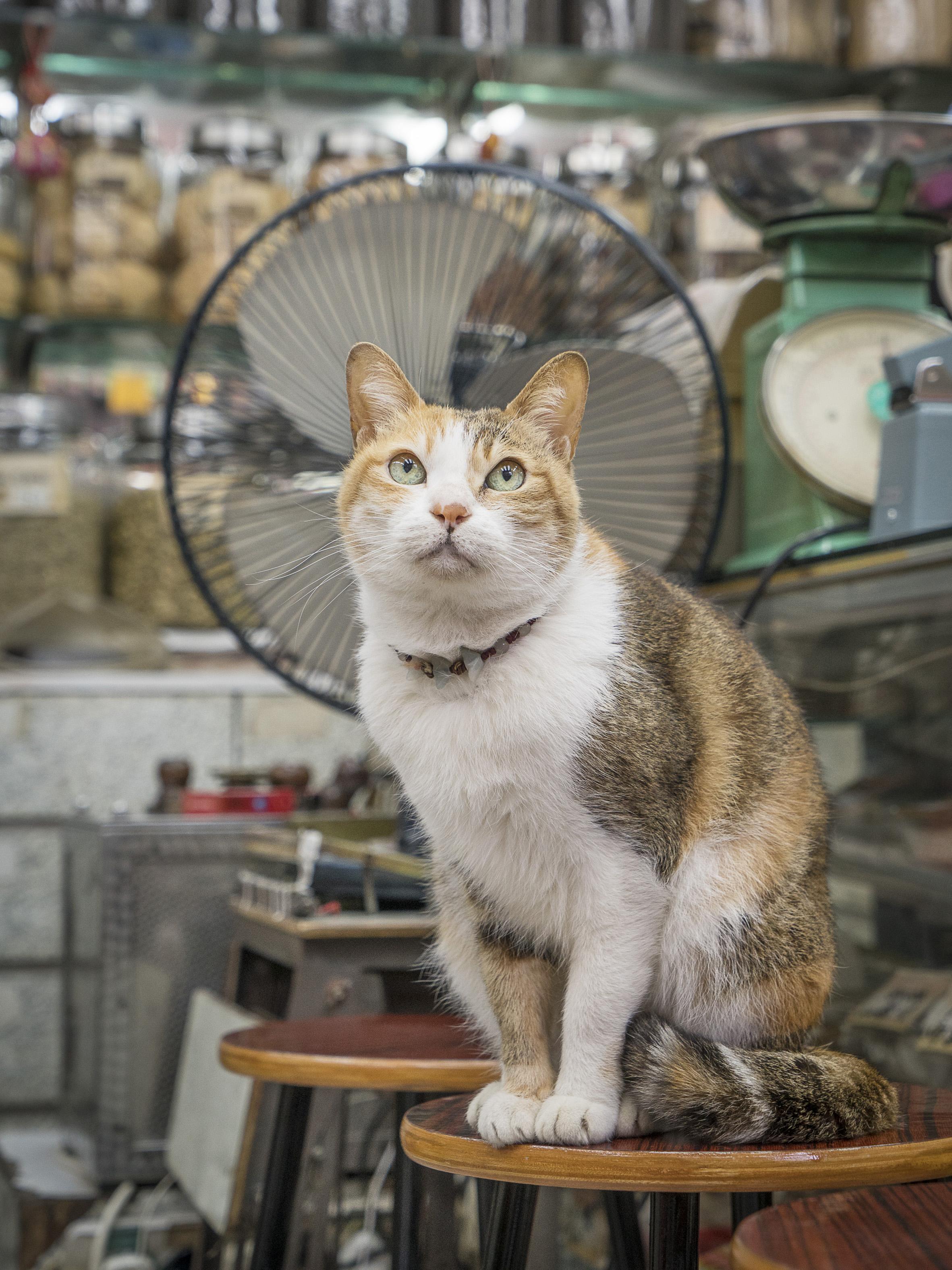 M. Heijnen, HK Shop Cats #28.jpg