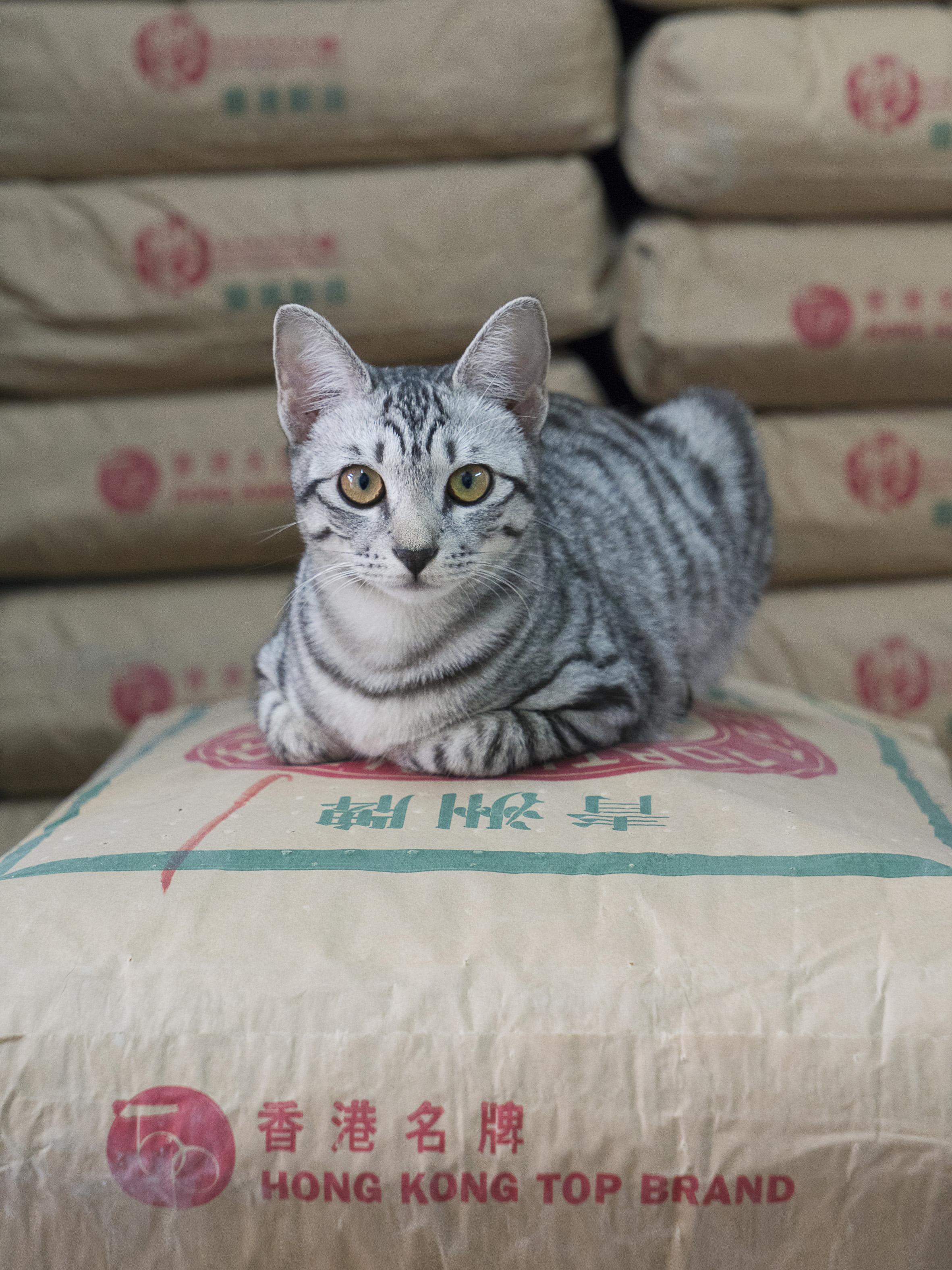 M. Heijnen, HK Shop Cats #50.jpg