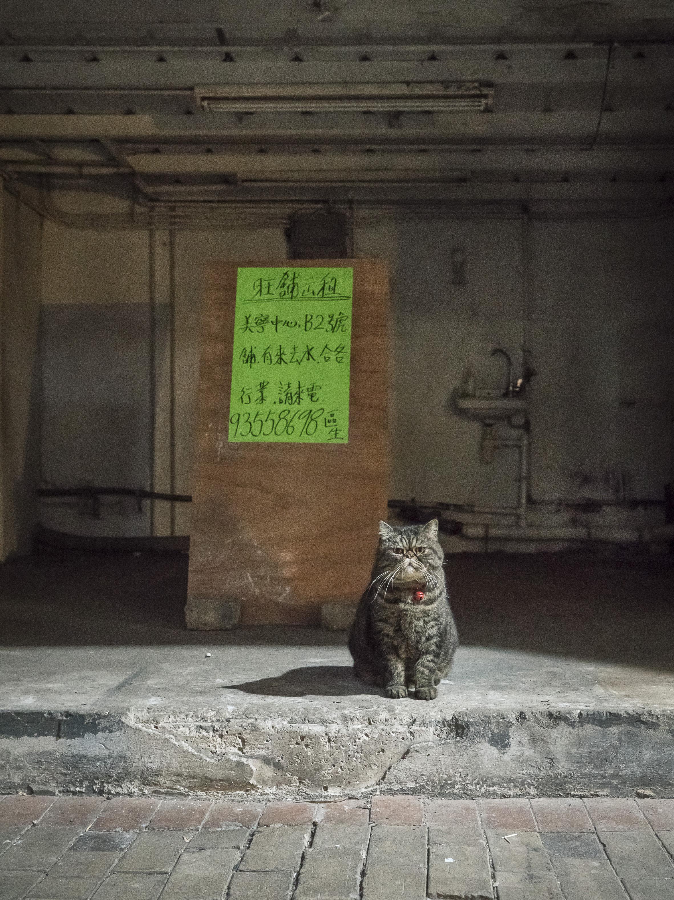 M. Heijnen, HK Shop Cats #59.jpg