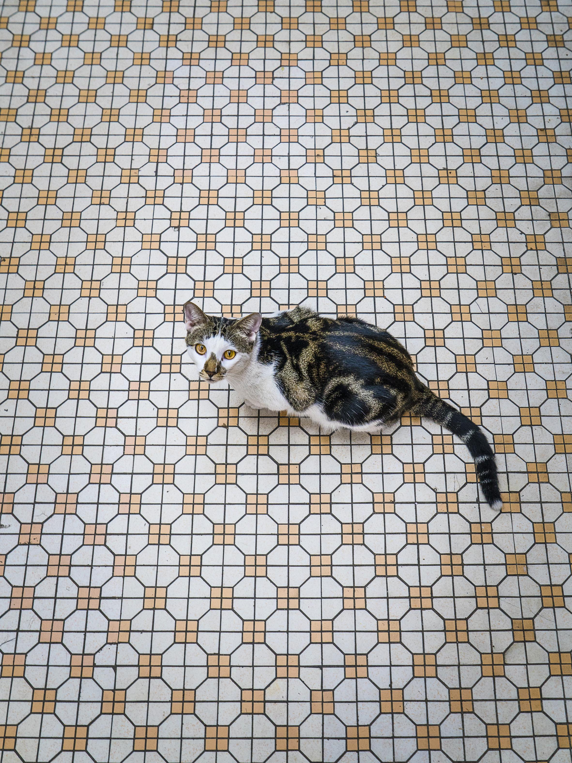 M. Heijnen, HK Shop Cats, 'Camouflage'.jpg