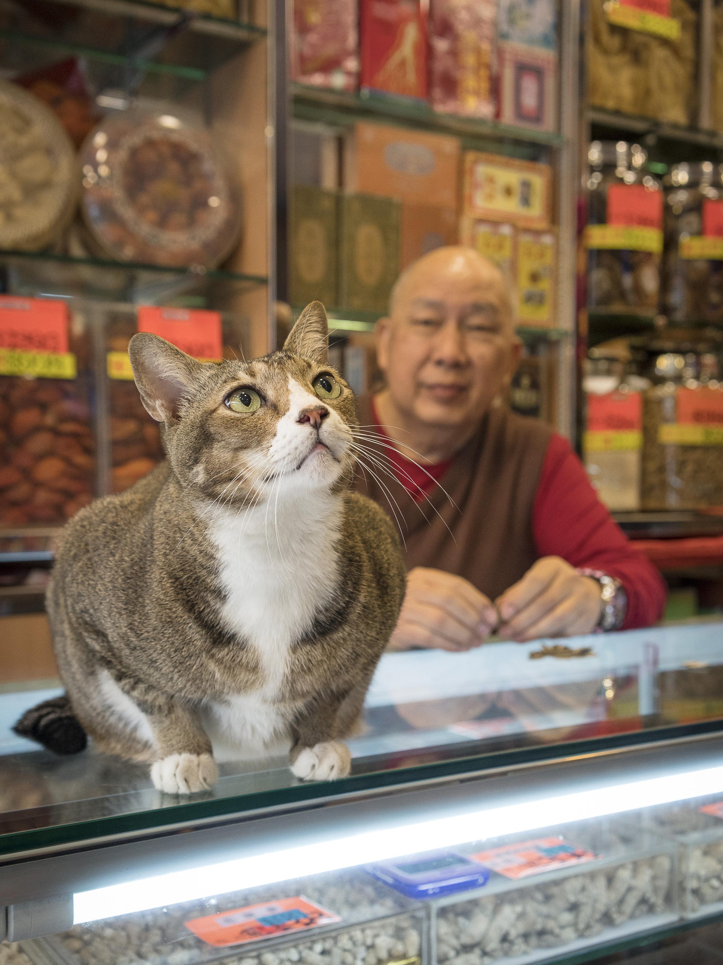 M. Heijnen, HK Shop Cats, 'Counter Culture'.jpg