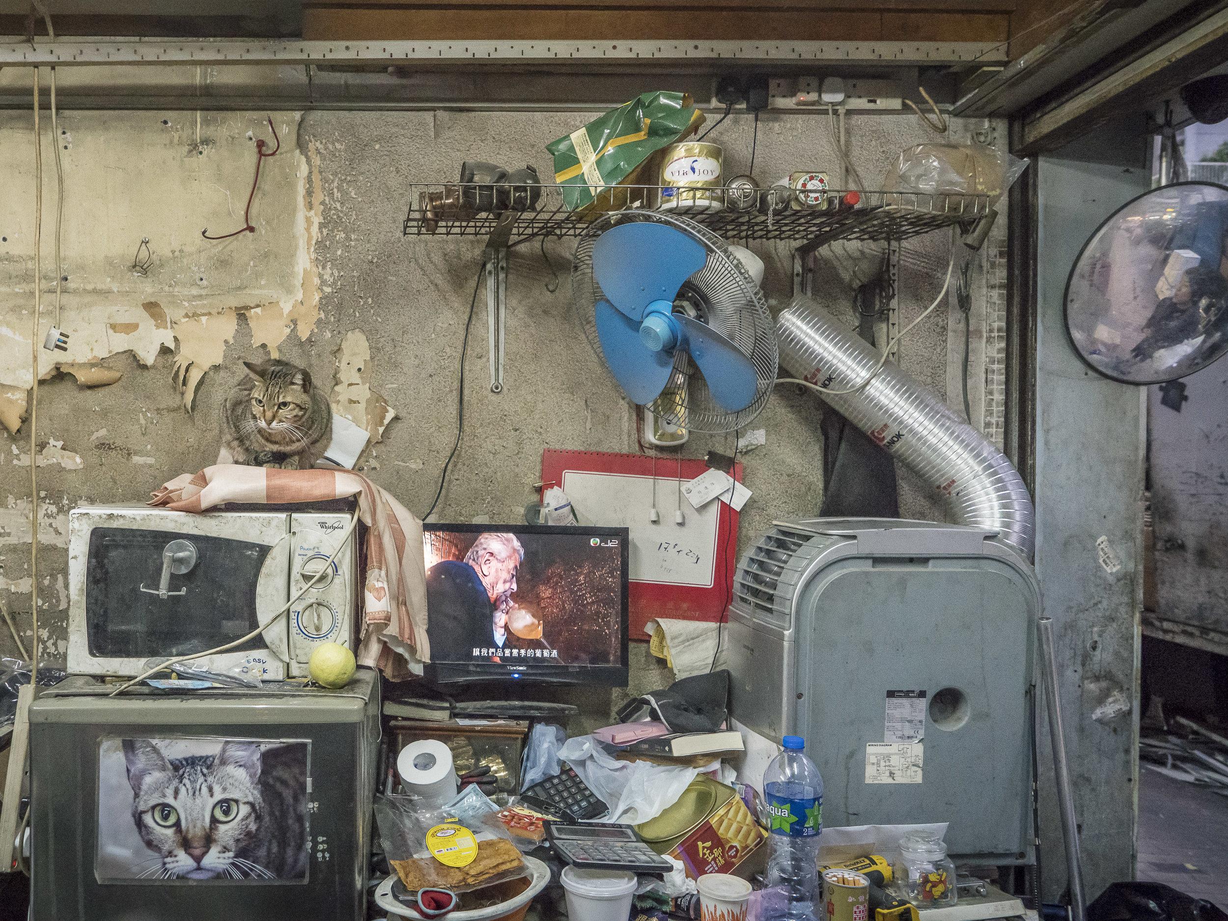 M. Heijnen, HK Shop Cats, 'Nostalgia'.jpg