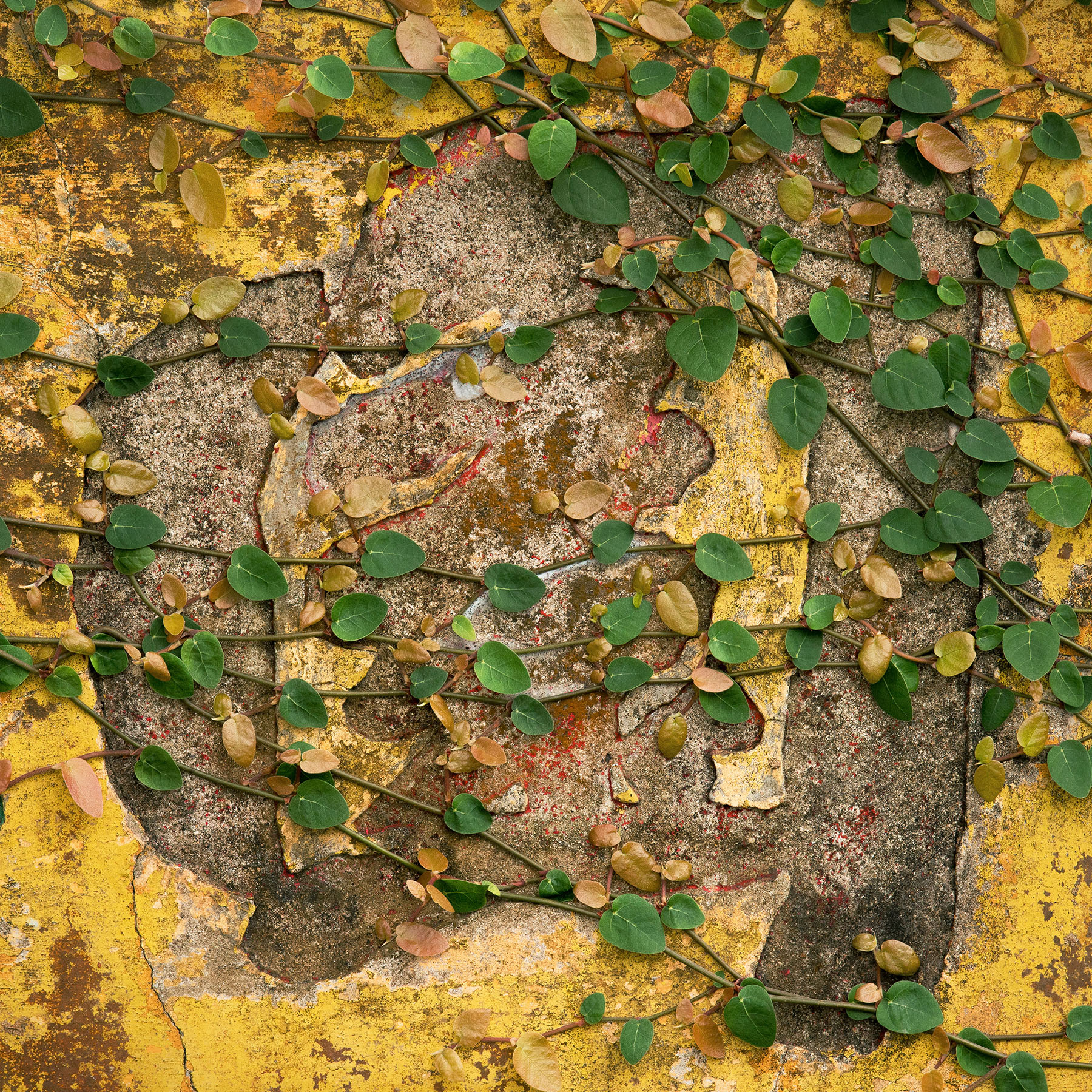 City Poetry - Romain Jacquet-Lagrèze '園 - Forgotten Garden' Hong Kong 2019, courtesy of Blue Lotus Gallery.jpg