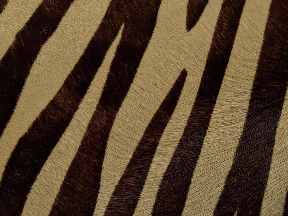 Semi Exotic -  HAIR ON HIDE CREAM & BROWN