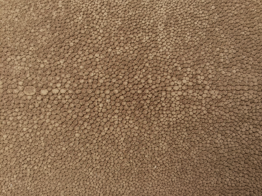 Semi Exotic -  TAUPE SUEDED SHAGREEN