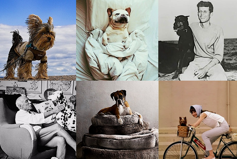 photo credit/source: 1. 1.  Phil Marion Yorkie at Kew Beach in his muscle wear  - 2.  Apartment 34  - 3.  Buzz ShareJFK (35th President of the US)  - 4  Daily Beast Vintage Celebrity Pets on the Riviera, courtesy of teNeus  - 5.  Restoration Hardware  - 6.  Cecil Beaton: Icons of the 20th Century in Pictures via The Guardian