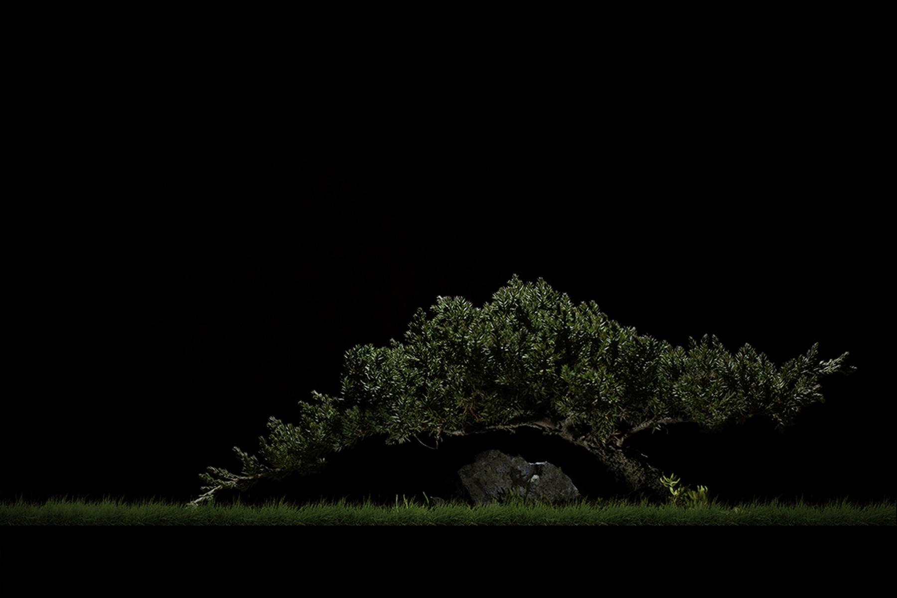 bonsai-before.jpg