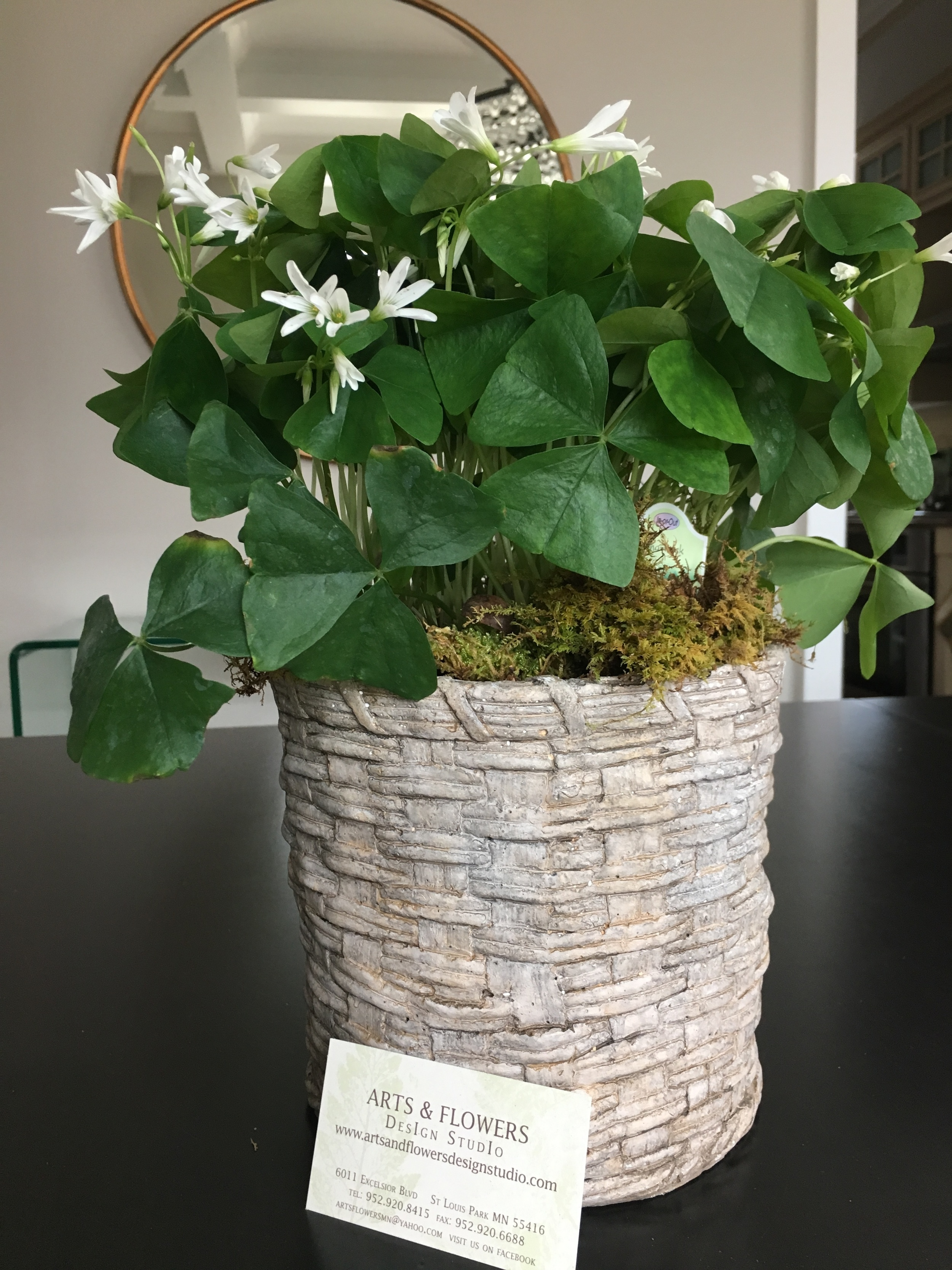 This shamrock plant was $15 and the container which is made of stone was $24 from Arts & Flowers.