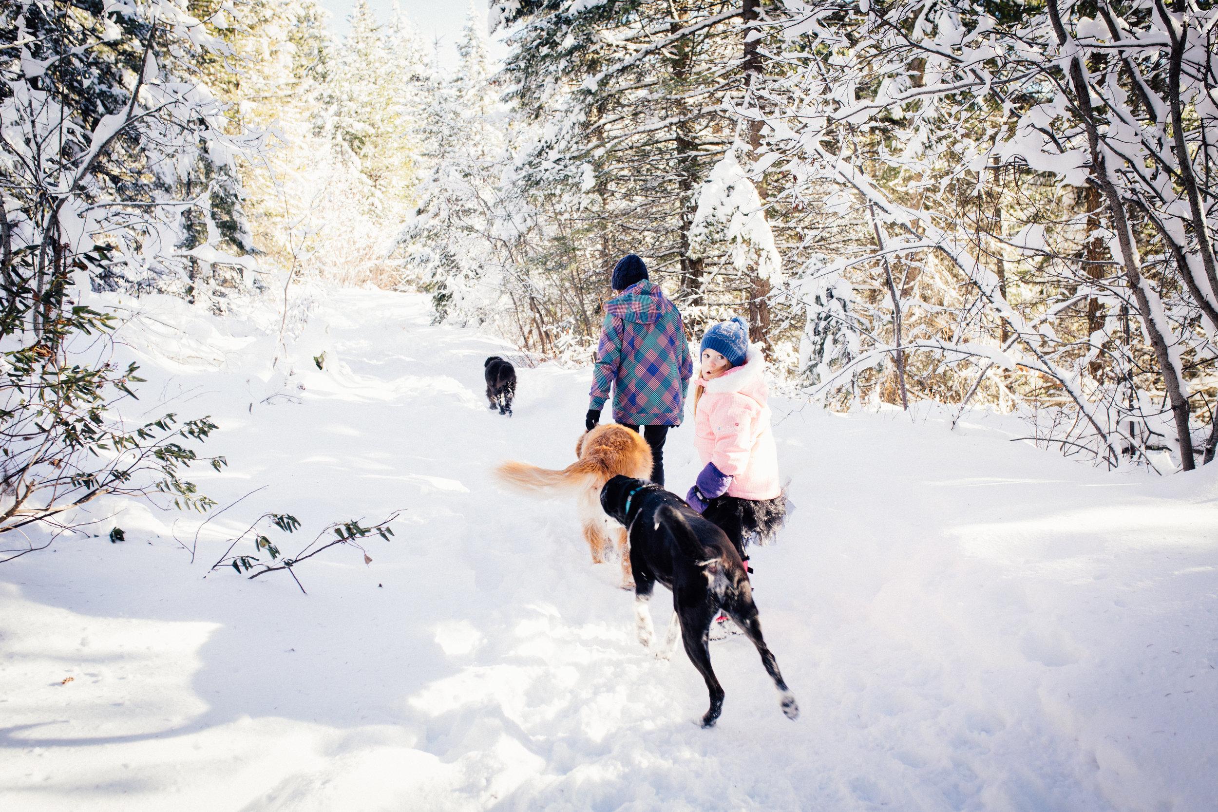 dogwoodphotography_westkootenay_photographer_family_rossland_fosterfamily-5.jpg
