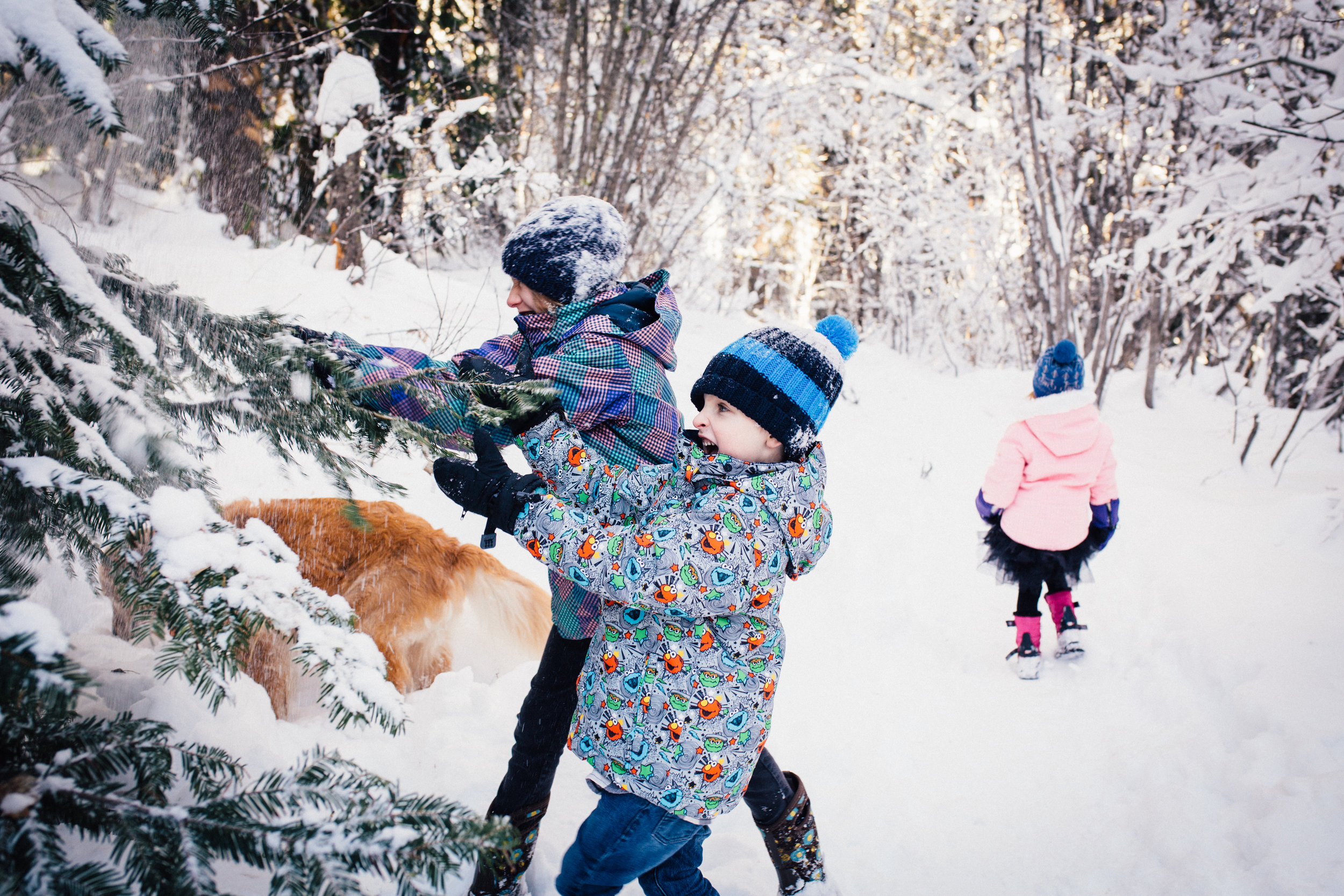 dogwoodphotography_westkootenay_photographer_family_rossland_fosterfamily-15.jpg