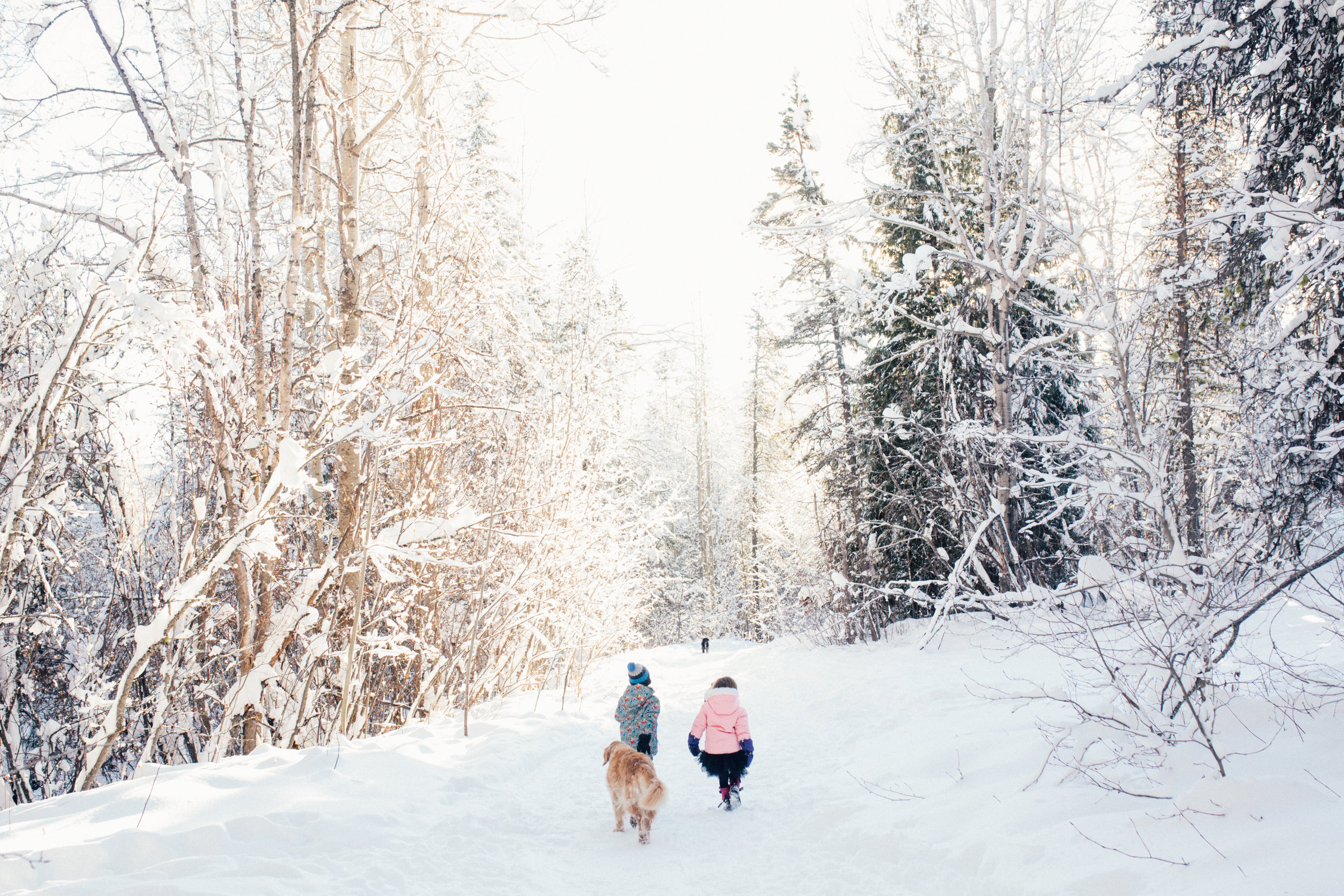 dogwoodphotography_westkootenay_photographer_family_rossland_fosterfamily-93.jpg