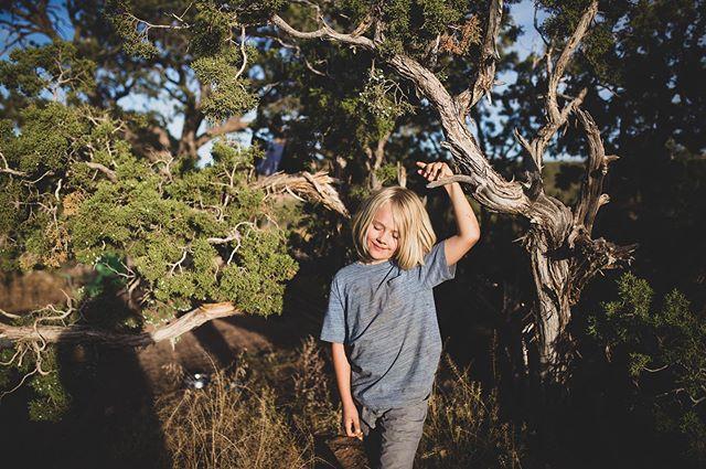 Roo bluesing in a Juniper bush.. or is it a tree?