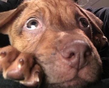 My newest adoption, Oliver